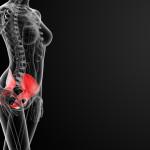3d render female hip bone - side view