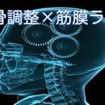 後頭骨×筋膜ライン