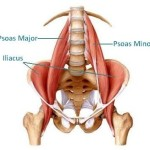 251012045125hip flexors labelled