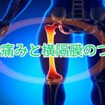 大腿と横隔膜