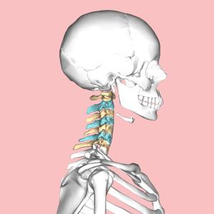 Cervical_vertebrae_lateral3
