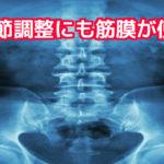 関節と筋膜