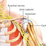 shoulderexercise_clip_image005