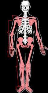 skeleton-41513_1280