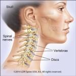 spine.anatomy